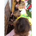 Replanting our 'magic beans' that we planted last term.