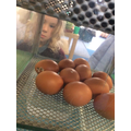 One of the eggs is hatching!