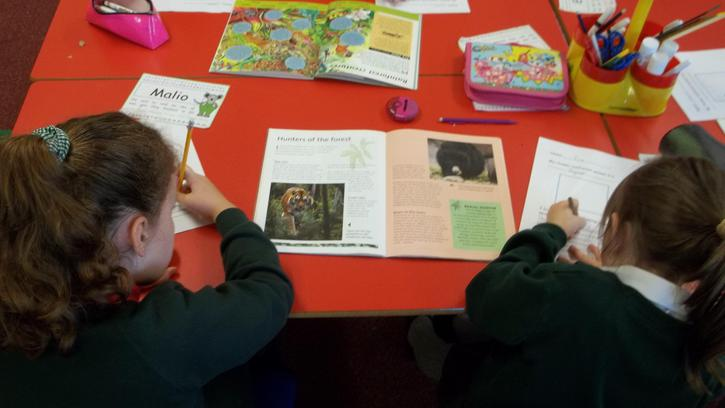 Independent research for rainforest animal project
