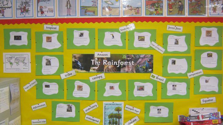 Rainforest animal display