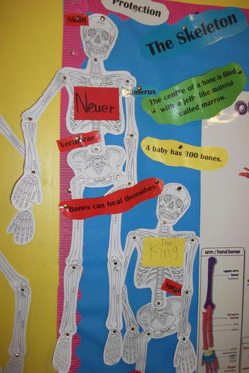 We made skeletons to show how our joints work