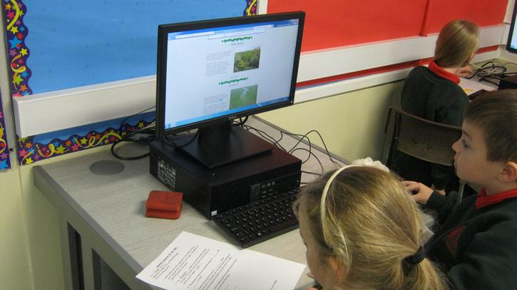 We researched rainforests.