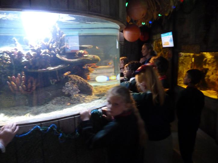 Checking out the fish at Exploris.