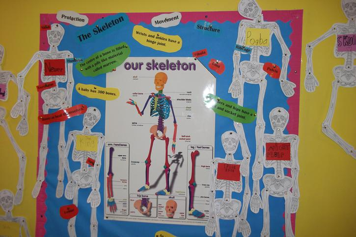 We have found out facts about our skeleton