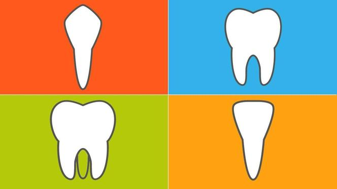The types and function of different teeth