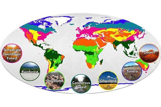 Climate and the 7 biomes on Earth.