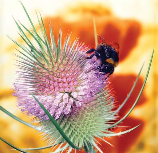 Pollination. The function of a leaf, root and parts of a flower