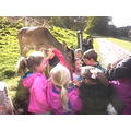 They fed the deers.