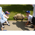 Jacob getting hands on with the giant tortoise