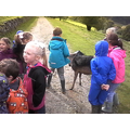 The children loved the deers.