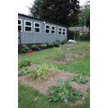 Gardening Club - our lovely vegetable patch
