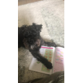 Mrs Mellor's dog Murphy learning about volume