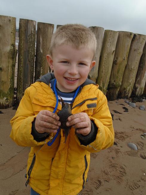 Reuben found 2 different 'mermaids' purses'!
