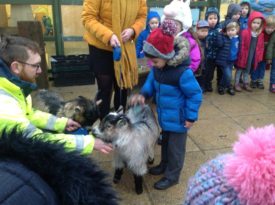 "The ""Two Billy Goats Gruff"" came to school."