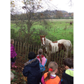 The horses were curious to see the visitors.