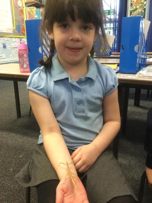 Caring for stick insects