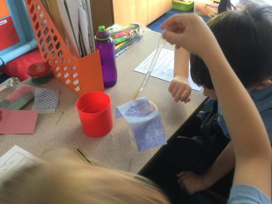 Here we are testing absorbency of materials.