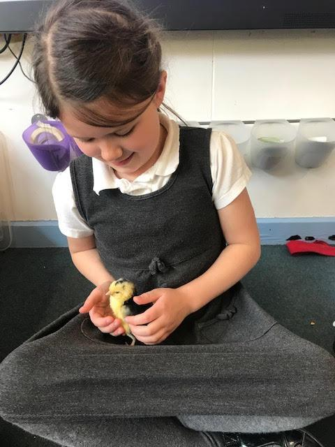 The children looking after the chicks