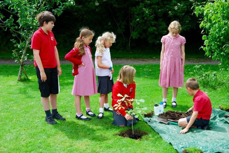 Oak Tree Planting for The Queen's Birthday
