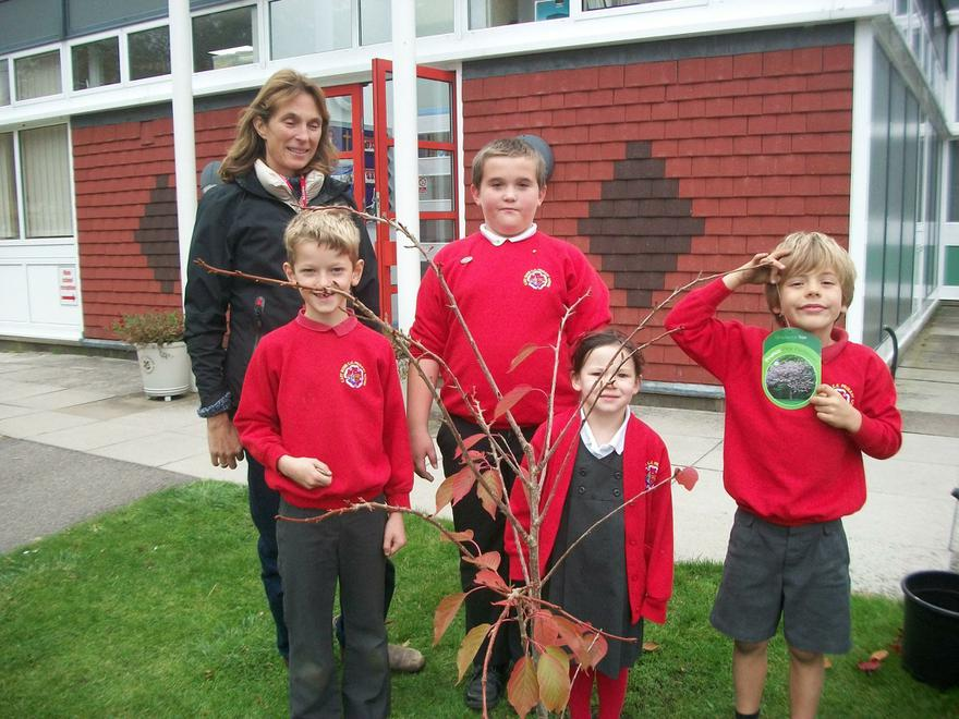 Planting our tree from Archie Primrose.
