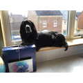 Holly chilling at school