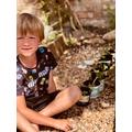 Jasper repotting seedlings ready to raise money