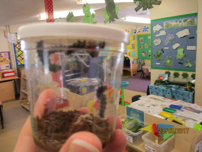 And our caterpillars are getting fatter and fatter