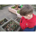 Looking at plants we have grown