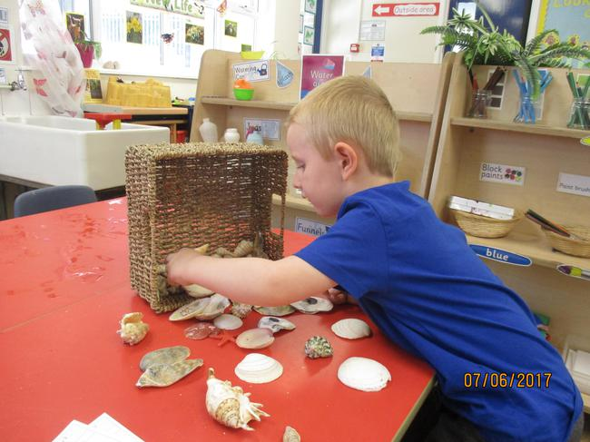 Choosing our favourite shell