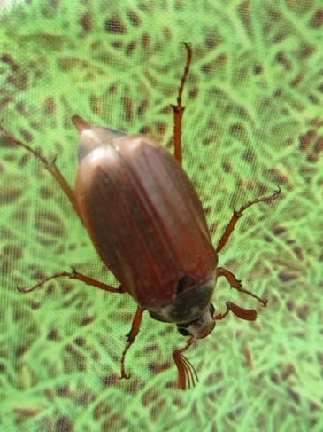 Look at this beetle we found on our nature walk.