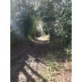 Drovers Lane