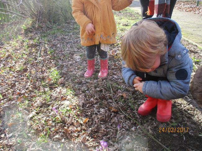 Taking a closer look at the Crocuses