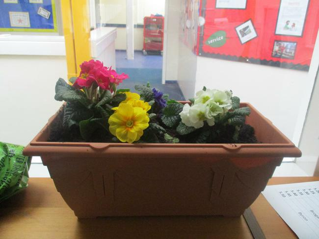We repotted the flowersand looked at the roots