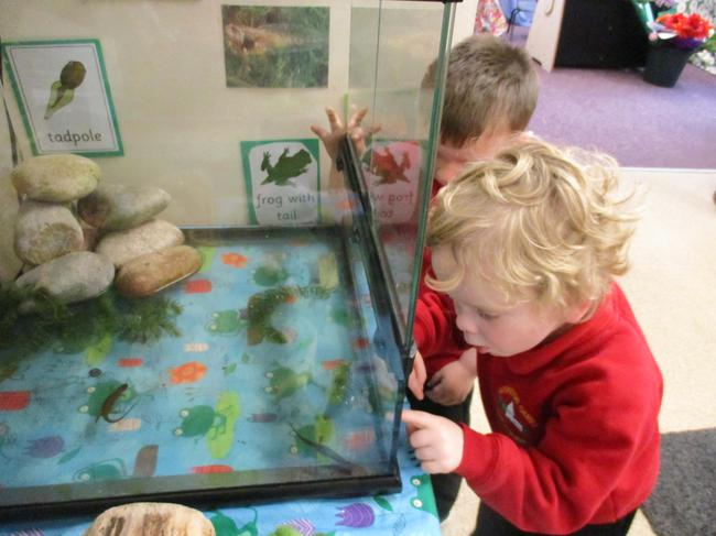 We are observing the Newts in our classroom!