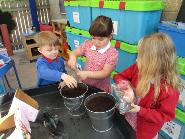 We palnted plants for the caterpillars to eat.
