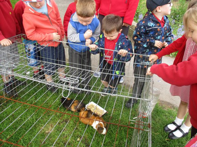 School guinea pigs!