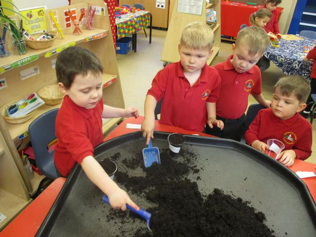 We are planting sunflower seeds!