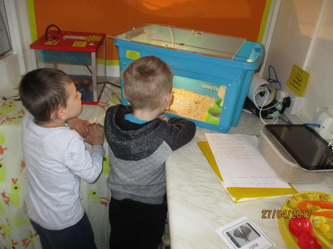 The children loved watching the incubator