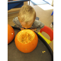 Observing inside a pumpkin!