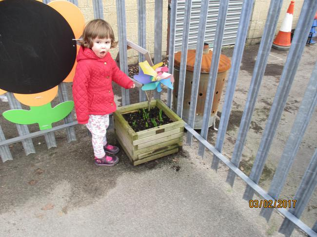 Look what's growing in the Nursery plant pots!