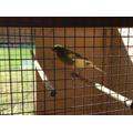 It's a bird's life!