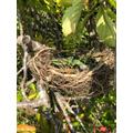 Maisy's bird nest!