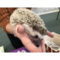 Meeting Harry the hedgehog, December 2018