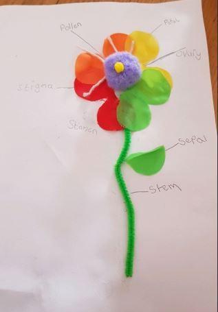 Tayia's flower