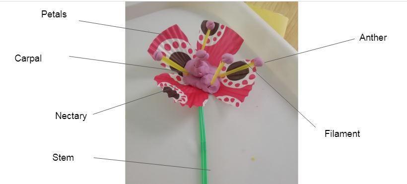 Imogen's flower