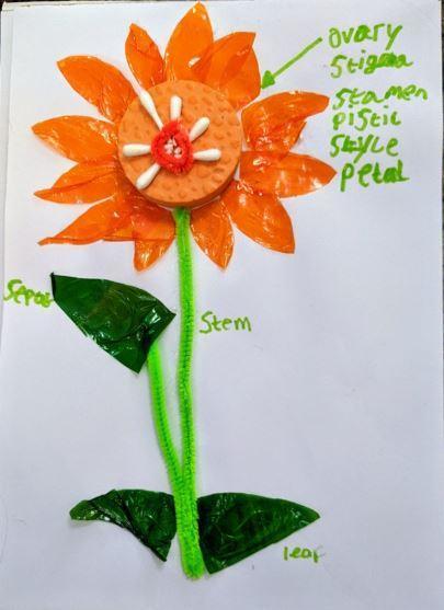 Evan's flower