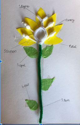 Aston's flower