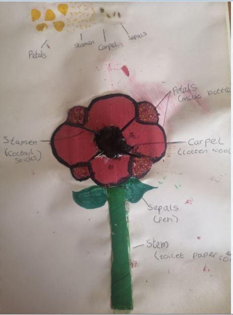 Isabel's flower