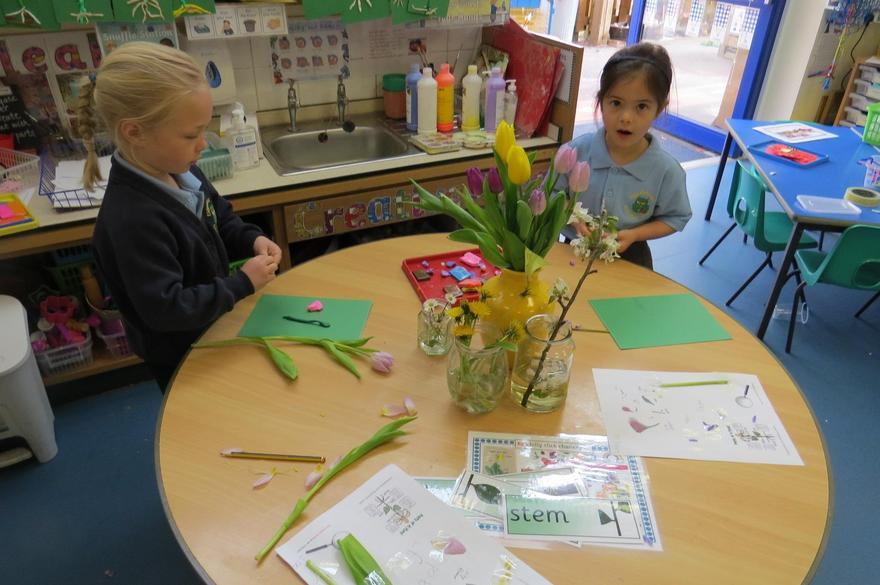 Dissecting flowers and observing carefully...