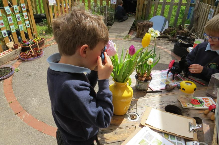 looking closely at plants...